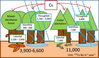Estimation of radioactive 137-cesium transportation by litterfall