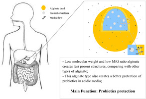 Effect of alginate molecular weight and M/G ratio in beads