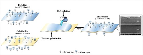 Physical/thermal properties and heat seal ability of bilayer films