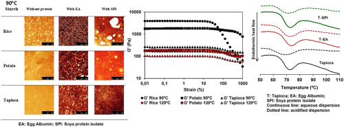 Impact Of Acidification And Protein Fortification On Thermal