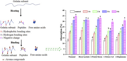 Thermal degradation of gelatin enhances its ability to bind