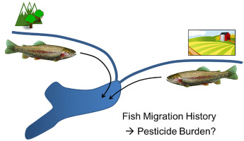 graphical abstract depicting the influence of migration history on pesticide burden in trout