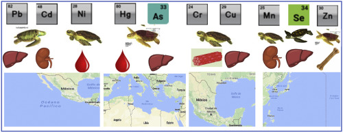 The current situation of inorganic elements in marine turtles: A
