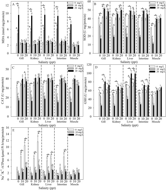 Mitigation of nitrite toxicity by increased salinity is associated