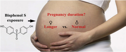Direct Evidence Of Exposure Of Pregnant >> Relationship Between Maternal Exposure To Bisphenol S And Pregnancy