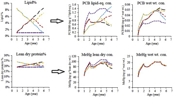 Protein and lipid growth rates regulate bioaccumulation of