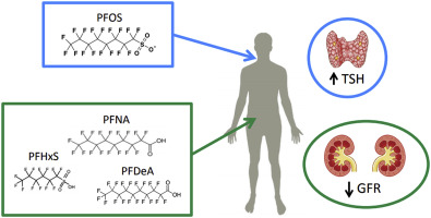 Associations between longitudinal serum perfluoroalkyl substance