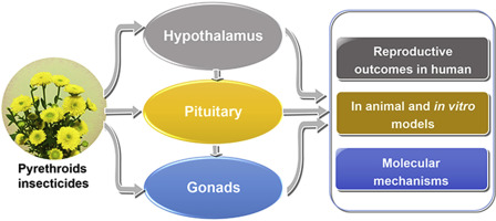 hypothalamic pituitary testicular axis