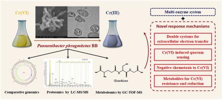 Multi-omics response of Pannonibacter phragmitetus BB to