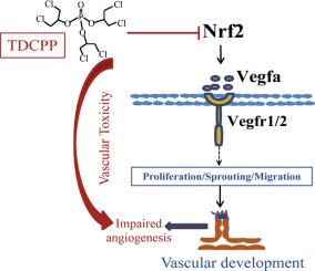 Exposure to tris(1,3-dichloro-2-propyl) phosphate (TDCPP