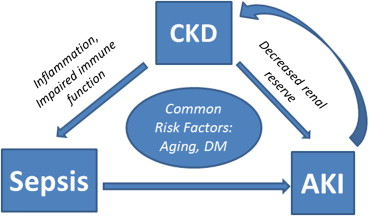 Entanglement Of Sepsis Chronic Kidney Disease And Other Comorbidities In Patients Who Develop Acute Kidney Injury Sciencedirect