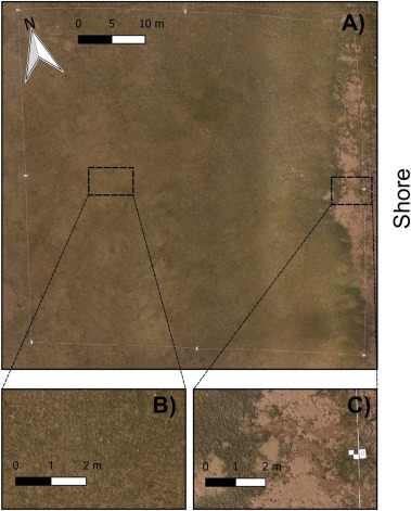 Spatial assessment of intertidal seagrass meadows using