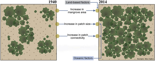 Characterizing landscape patterns in changing mangrove ecosystems at