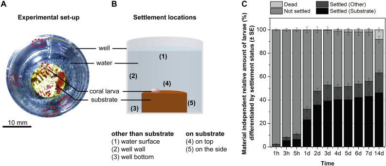 Porous ceramics with tailored pore size and morphology as substrates