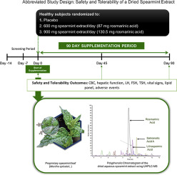 Safety and tolerability of a dried aqueous spearmint extract