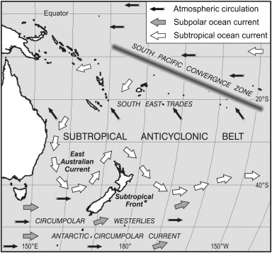 The vegetation cover of New Zealand at the Last Glacial Maximum ...