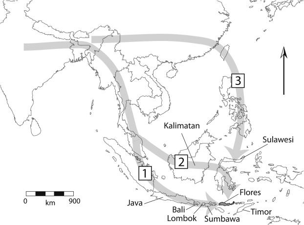 Paleoantropologa Hoy