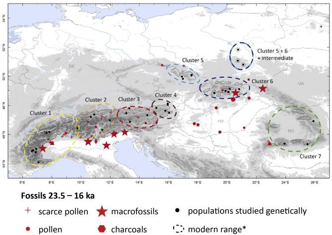 History of Larix decidua Mill. (European larch) since 130 ka ...