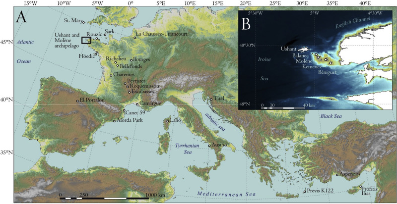 Postglacial recolonization and Holocene diversification of