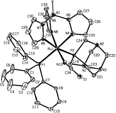 Novel Hydridotrispyrazolylborate Rutheniumii Complexes