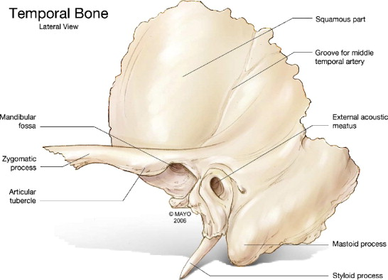 Temporal Bone Fractures A Review For The Oral And Maxillofacial