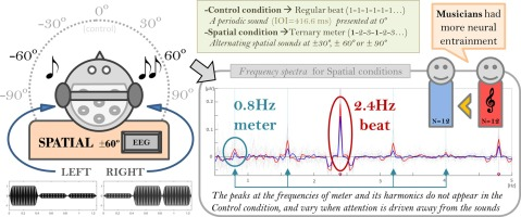 Ternary meter from spatial sounds: Differences in neural