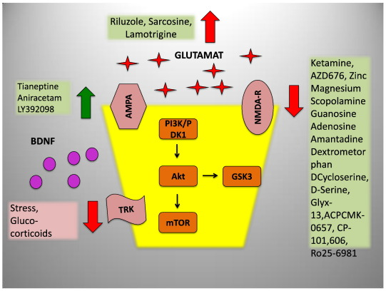 Role of calcium, glutamate and NMDA in major depression and