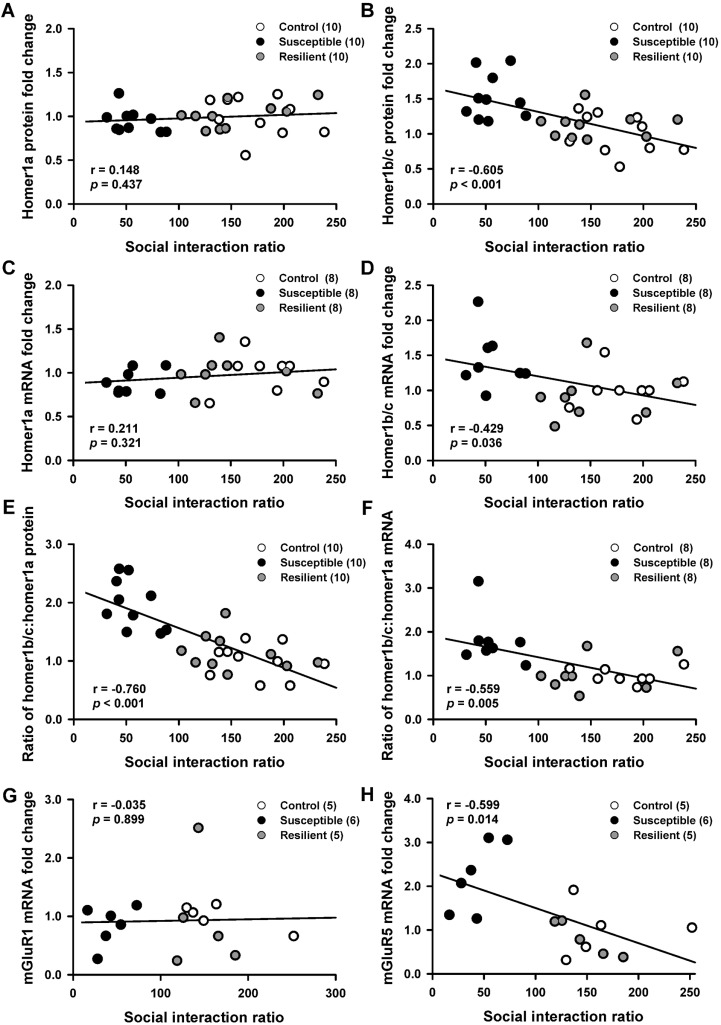 Increased Homer1-mGluR5 mediates chronic stress-induced