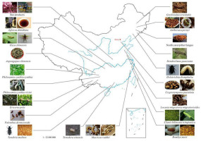 Toxicological characteristics of edible insects in China: A