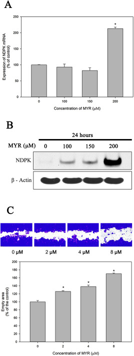 Potential role of nucleoside diphosphate kinase in myricetin