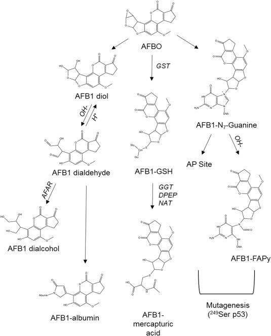 Aflatoxin B1 A Review On Metabolism Toxicity Occurrence In Food