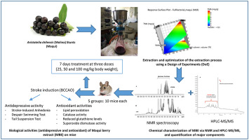 Antidepressive effects of a chemically characterized maqui berry