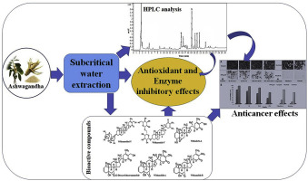 Subcritical water extraction of withanosides and