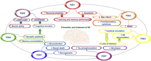 磷酸二酯酶抑制剂NO说,阿尔茨海默氏病
