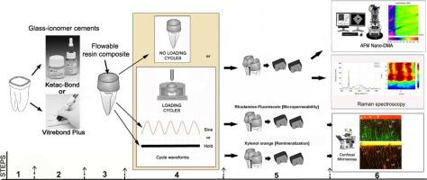 In vitro mechanical stimulation facilitates stress