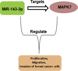 MiR-143-3p inhibits the proliferation, cell migration and invasion