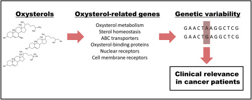 Importance of genetic background of oxysterol signaling in cancer