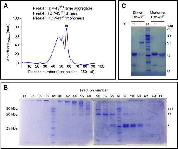 The amyloidogenicity of a C-terminal region of TDP-43 implicated in