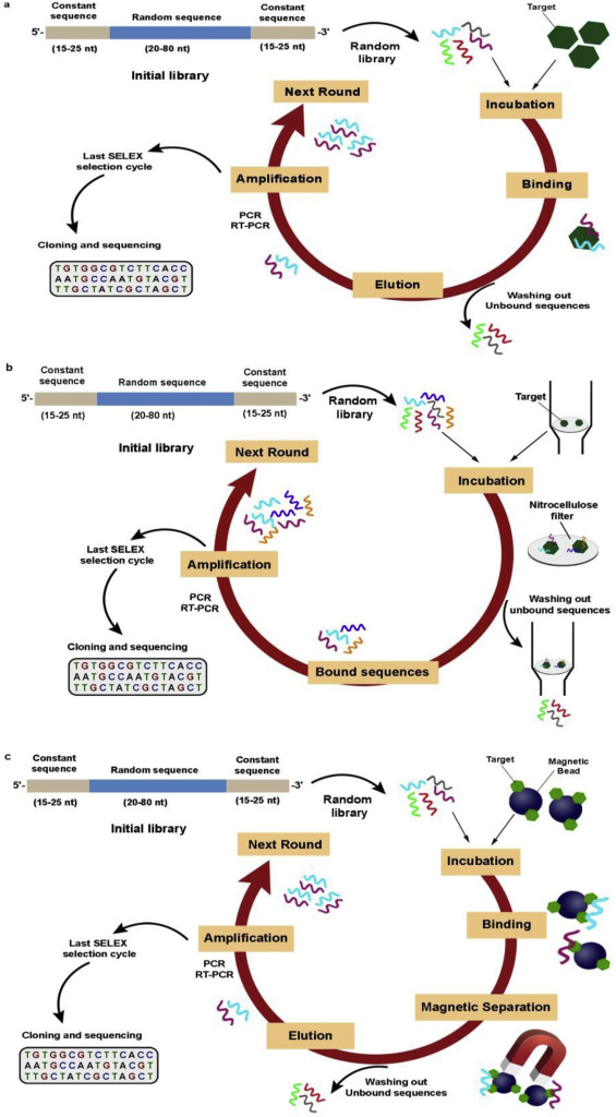 SELEX methods on the road to protein targeting with nucleic acid