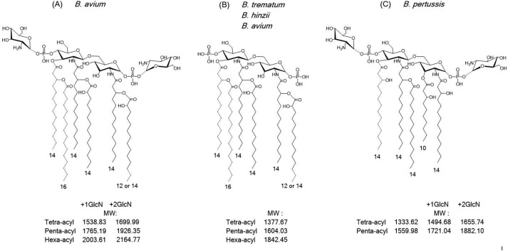 A comparative study of the complete lipopolysaccharide