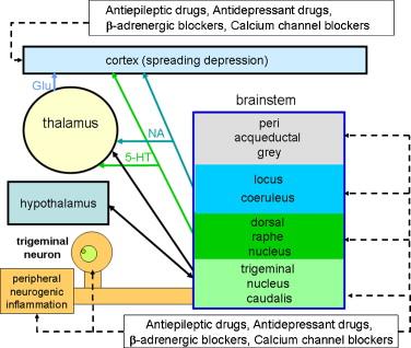 propranolol metabolism