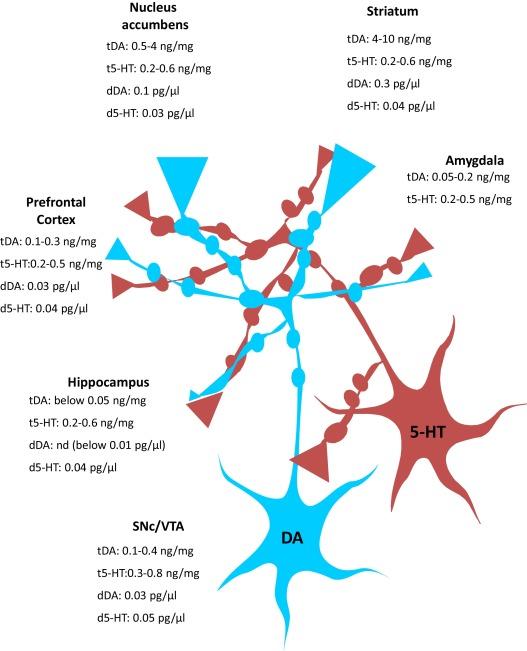 Serotonergic modulation of the activity of mesencephalic