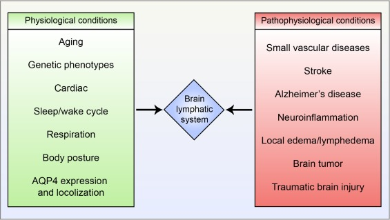Lymphatic drainage system of the brain: A novel target for ...