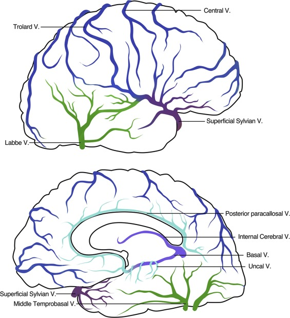 Cerebral venous collaterals: A new fort for fighting ischemic stroke ...