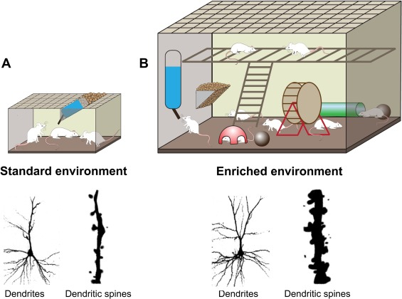 Enhancing endogenous capacity to repair a stroke-damaged