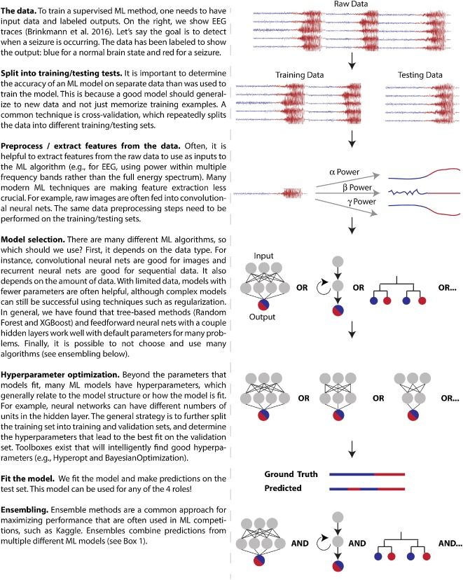 The roles of supervised machine learning in systems neuroscience
