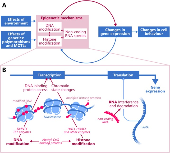 Epigenetic regulation in the pathophysiology of Lewy body dementia -  ScienceDirectScienceDirect.com