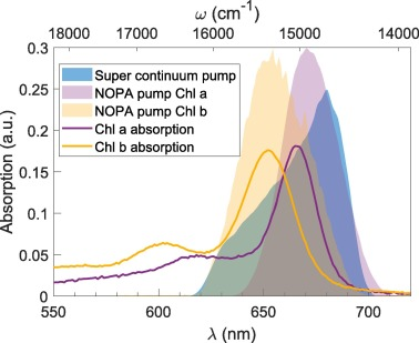 Studying the spectral diffusion dynamics of chlorophyll a