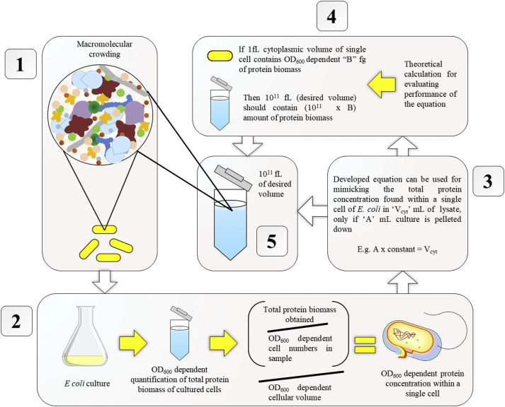 An equation for biomimicking macromolecular crowding using