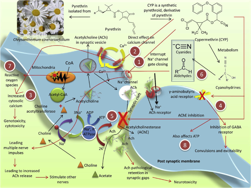 cypermethrin induced toxicities in fish